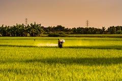 Ένας αγρότης ψεκάζει τα εντομοκτόνα, στους τομείς ρυζιού στη διαδικασία γεωργίας βραδιού στην Ταϊλάνδη στοκ εικόνες με δικαίωμα ελεύθερης χρήσης