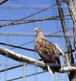 ένας αετός στοκ φωτογραφίες με δικαίωμα ελεύθερης χρήσης