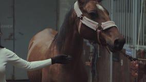 Ένας αναβάτης που κτυπά το άλογό της απόθεμα βίντεο
