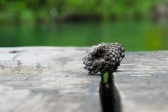 Ένας ανανάς πεύκων σε μια γέφυρα με ένα bokhe backgroun Στοκ Φωτογραφίες