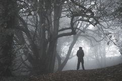 Ένας απομονωμένος απόκοσμος με κουκούλα αριθμός που στέκεται σε μια πορεία σε ένα χειμερινό δάσος μια ομιχλώδη ημέρα Με χαμηλωμέν στοκ εικόνες με δικαίωμα ελεύθερης χρήσης
