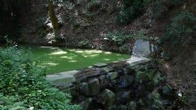 Ένας αργός ρέοντας ποταμός κάλυψε πολύ cyanobacteria φιλμ μικρού μήκους