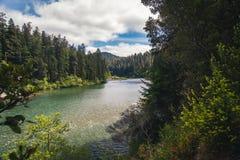 Ένας δασικός ποταμός μια ηλιόλουστη ημέρα Στοκ Φωτογραφία