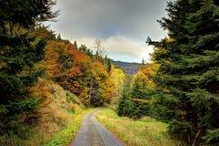 Ένας δασικός δρόμος με τα χρώματα του φθινοπώρου Στοκ εικόνα με δικαίωμα ελεύθερης χρήσης