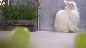 Ένας ατημέλητος άσπρος καθαρισμός κουνελιών κοντά σε έναν ξύλινο φιλμ μικρού μήκους