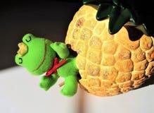 Ένας βάτραχος που ξυπνά από τη διαχείμαση την άνοιξη Στοκ Εικόνες