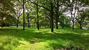 Ένας βαθύς - πράσινο δάσος σε Windsor στοκ εικόνες