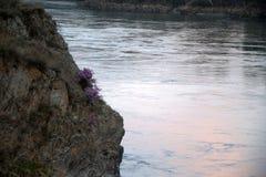 Ένας βράχος με μια ανθίζοντας ακακία και μια αντανάκλαση του ουρανού και το δάσος σε έναν ποταμό βουνών που ρέει κάτω από το Alta στοκ φωτογραφία με δικαίωμα ελεύθερης χρήσης