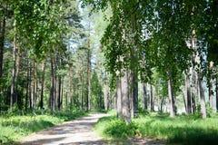 Ένας βρώμικος δρόμος στο θερινό ηλιοφώτιστο δάσος στοκ εικόνες