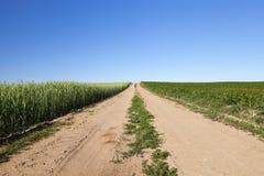 Ένας γεωργικός τομέας με μια συγκομιδή Στοκ Εικόνες