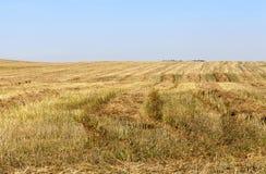 Ένας γεωργικός τομέας Στοκ Εικόνα