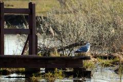 Ένας γλάρος στην αποβάθρα το καλοκαίρι στον ηλιόλουστο καιρό Στοκ Εικόνες