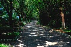 Ένας διαστισμένος δρόμος της σκιάς δέντρων Στοκ Εικόνες