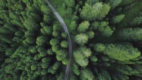 Ένας δρόμος που ανακαλύπτεται μεταξύ των πράσινων δέντρων του δάσους άνωθεν απόθεμα βίντεο