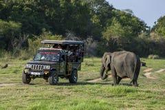 Ένας ελέφαντας βόσκει δίπλα σε ένα τζιπ σαφάρι τουριστών στοκ φωτογραφία
