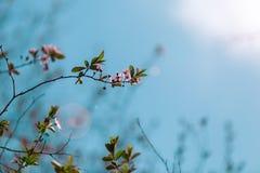 Ένας λεπτός κλάδος της ανάπτυξης λουλουδιών προς το μπλε ουρανό Στοκ εικόνα με δικαίωμα ελεύθερης χρήσης