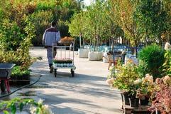 Ένας εργαζόμενος με ένα κάρρο πηγαίνει μετά από τα σπορόφυτα στα εμπορευματοκιβώτια σε μια πώληση κήπων Δέντρα για τη φύτευση στο στοκ φωτογραφία με δικαίωμα ελεύθερης χρήσης