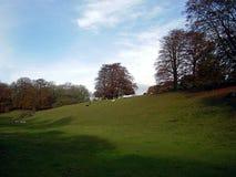 Ένας ευγενής τομέας του κεκλιμένου εδάφους στο parkland με τις απόμακρες απόψεις ο στοκ φωτογραφία με δικαίωμα ελεύθερης χρήσης