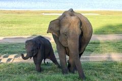 Ένας ελέφαντας και ο μόσχος της που βόσκουν δίπλα στη δεξαμενή & x28 προκαλούμενο από τον άνθρωπο reservoir& x29  στο εθνικό πάρκ στοκ φωτογραφίες