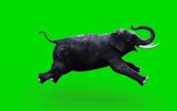 Ένας ελέφαντας που κινείται και που πηδά Στοκ Εικόνες
