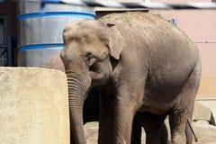Ένας ελέφαντας Στοκ εικόνες με δικαίωμα ελεύθερης χρήσης