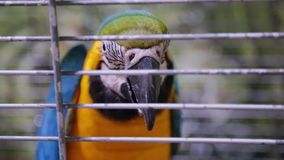 Ένας ζωηρόχρωμος παπαγάλος κάθεται σε ένα κλουβί απόθεμα βίντεο