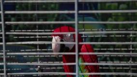Ένας ζωηρόχρωμος παπαγάλος κάθεται σε ένα κλουβί φιλμ μικρού μήκους