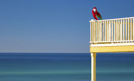 Ένας ζωηρόχρωμος παπαγάλος στην παραλία Στοκ Εικόνες