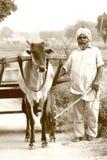 Ένας ηληκιωμένος με τη γενειάδα και τουρμπάνι με ένα bullock κάρρο στο χωριό του Punjab στοκ φωτογραφίες