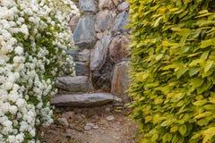 Ένας θάμνος των άσπρων λουλουδιών spirea Στοκ Εικόνες