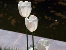 Ένας θαυμάσιος χρόνος της γοητείας λουλουδιών! στοκ εικόνες με δικαίωμα ελεύθερης χρήσης