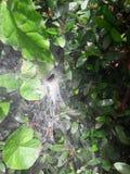 Ένας ιστός αράχνης Στοκ εικόνα με δικαίωμα ελεύθερης χρήσης