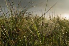 Ένας Ιστός αραχνών με κάποια δροσιά νωρίς το πρωί με τις ακτίνες ήλιων Στοκ Εικόνες