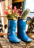 Ένας κάκτος φυτεύει flowerpot μποτών Στοκ Φωτογραφία