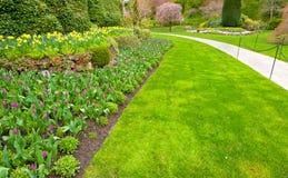 Ένας κήπος με τον πολύβλαστο πράσινο χορτοτάπητα και η τουλίπα ανθίζουν το κρεβάτι Στοκ Εικόνες
