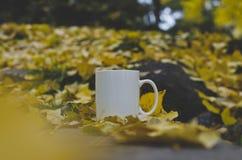 Ένας κενός καφές κλέβει το καλυμμένο δασικό πάτωμα στοκ εικόνα