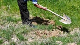 Ένας κηπουρός, εργαζόμενος που σκάβει το έδαφος, που λειτουργεί με το φτυάρι απόθεμα βίντεο
