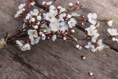 Ένας κλάδος ενός άνθους κερασιών βρίσκεται σε έναν ξύλινο πίνακα σύστασης Στοκ φωτογραφίες με δικαίωμα ελεύθερης χρήσης