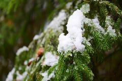 Ένας κλάδος ενός χριστουγεννιάτικου δέντρου και του πρώτου χιονιού Στοκ Φωτογραφία