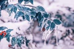 Ένας κλάδος με τα κόκκινα μούρα snowdrift στον κήπο στοκ φωτογραφίες με δικαίωμα ελεύθερης χρήσης