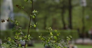 Ένας κλάδος με τα πράσινα φύλλα που ταλαντεύονται ήρεμα ως οικογένειες και οι φίλοι απολαμβάνουν ένα ηλιόλουστο απόγευμα σε ένα κ φιλμ μικρού μήκους
