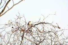 Ένας κλάδος συνεδρίασης σπουργιτιών του δέντρου στο δάσος στοκ φωτογραφία με δικαίωμα ελεύθερης χρήσης