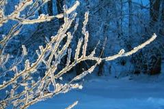 Ένας κλάδος του Μπους που καλύπτεται στον όμορφο άσπρο παγετό Στοκ Εικόνες