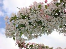 Ένας κλαδίσκος που μοιάζει με ένα λουλούδι στοκ φωτογραφία