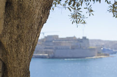 Ένας κορμός δέντρων, λιμάνι Μάλτα Valletta Στοκ Εικόνες