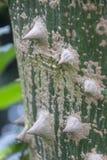 Ένας κορμός δέντρων με τις ακίδες Στοκ εικόνα με δικαίωμα ελεύθερης χρήσης