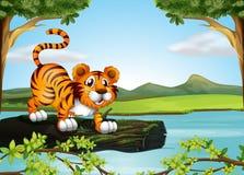 Ένας κορμός ενός δέντρου που επιπλέει στον ποταμό με μια τίγρη ελεύθερη απεικόνιση δικαιώματος