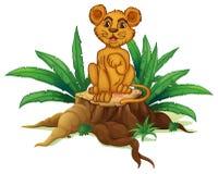 Ένας κορμός με ένα νέο λιοντάρι ελεύθερη απεικόνιση δικαιώματος