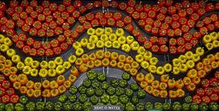 Ένας κυματιστός τοίχος των ζωηρόχρωμων πιπεριών Στοκ εικόνες με δικαίωμα ελεύθερης χρήσης