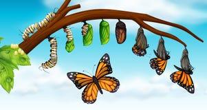 Ένας κύκλος ζωής πεταλούδων ελεύθερη απεικόνιση δικαιώματος